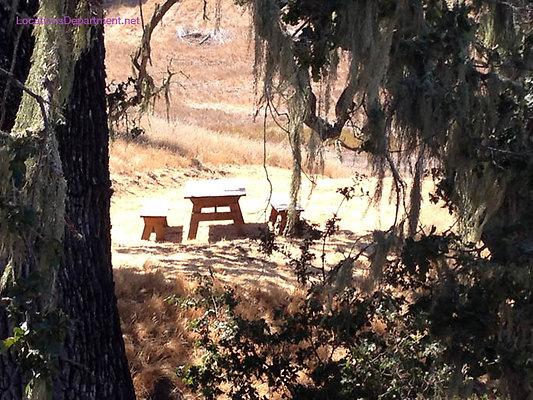 LocationsDepartment.Net Ranch 2018 Vineyard 025