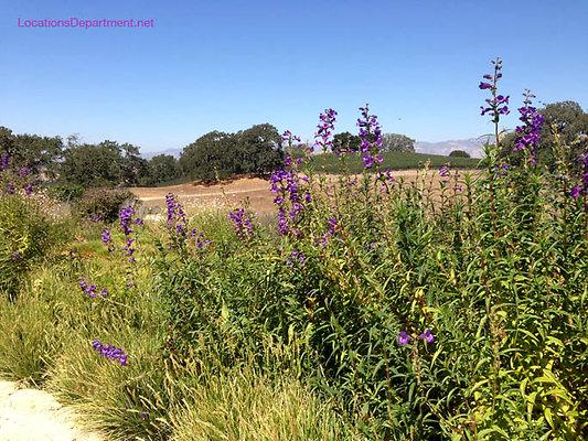LocationsDepartment.Net Ranch 2018 Vineyard 046