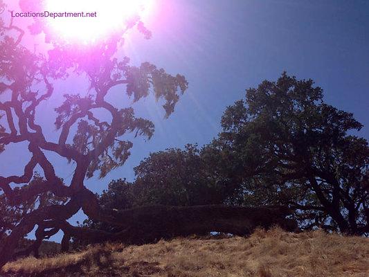 LocationsDepartment.Net Ranch 2018 Vineyard 029