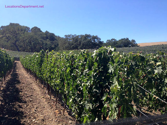LocationsDepartment.Net Ranch 2018 Vineyard 059