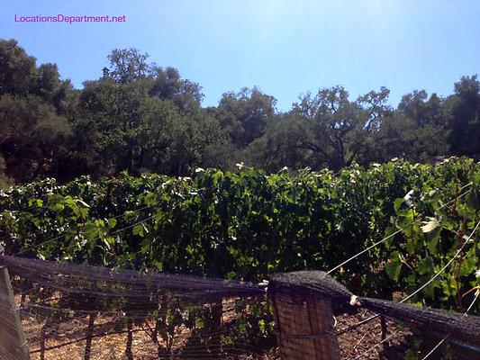 LocationsDepartment.Net Ranch 2018 Vineyard 061