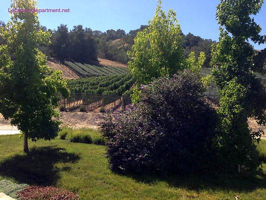 LocationsDepartment.Net Ranch 2018 Vineyard 050