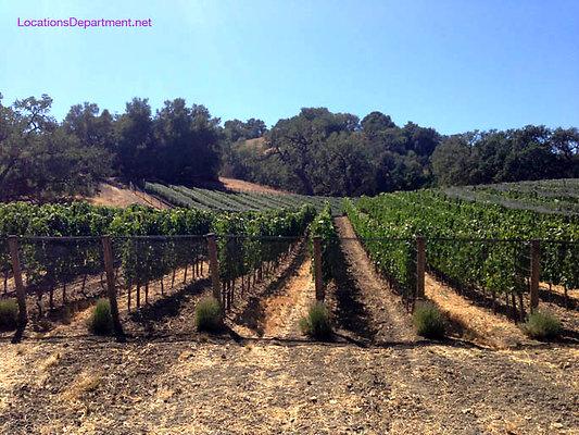LocationsDepartment.Net Ranch 2018 Vineyard 054