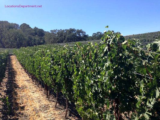 LocationsDepartment.Net Ranch 2018 Vineyard 057
