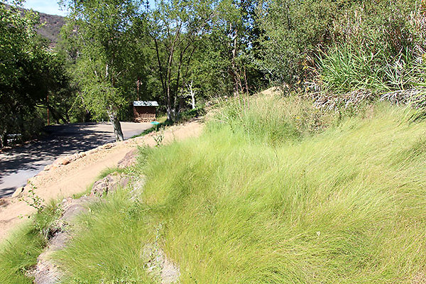 Dirt Road and Grass near Entry extension 054